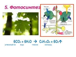 5. Фотосинтез 6СО2 + 6Н2О  С6Н12О6 + 6О2 углекислый газ вода глюкоза кислород