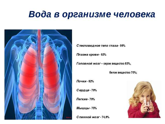 Вода в организме человека Стекловидное тело глаза - 99% Плазма крови - 92% Го...