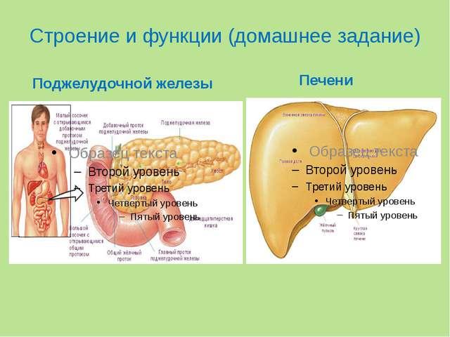 Строение и функции (домашнее задание) Поджелудочной железы Печени