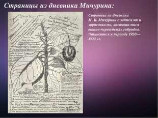 Страницы из дневника Мичурина: Страница из дневника И.В.Мичурина с записями
