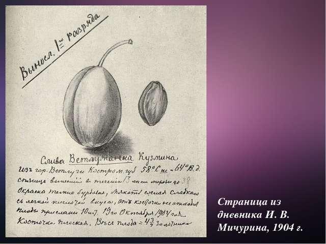 Страница из дневника И. В. Мичурина, 1904 г.