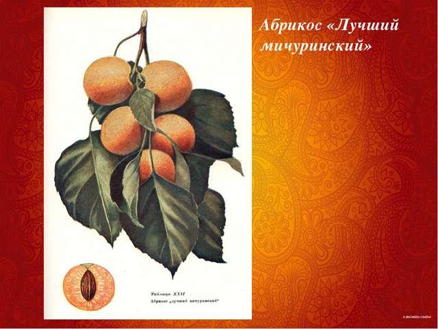 Абрикос «Лучший мичуринский»