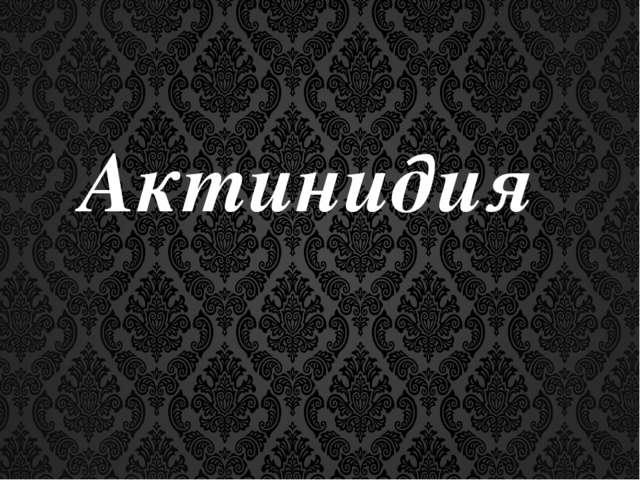 Актинидия.