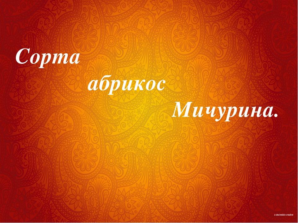 Сорта абрикос Мичурина.
