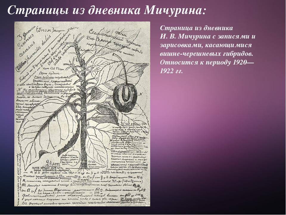 Страницы из дневника Мичурина: Страница из дневника И.В.Мичурина с записями...
