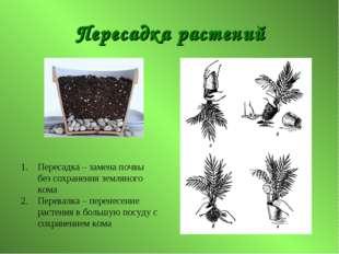 Пересадка растений Пересадка – замена почвы без сохранения земляного кома Пер