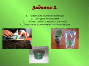 Задание 2. Выполнить перевалку растения Посадить хлорафитум Посеять семена ко