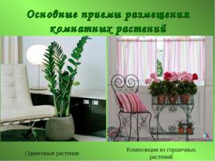 Основные приемы размещения комнатных растений Одиночные растения Композиция и