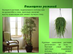 Размещение растений Крупные одиночные растения располагают на полу. Высокие у