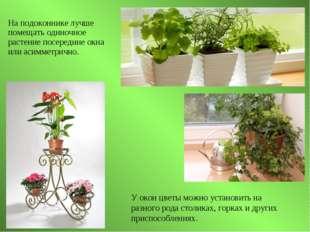На подоконнике лучше помещать одиночное растение посередине окна или асимметр