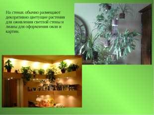 На стенах обычно размещают декоративно цветущие растения для оживления светло