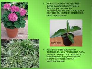 Комнатные растения красотой форм, окраской благоуханием благотворно влияют на