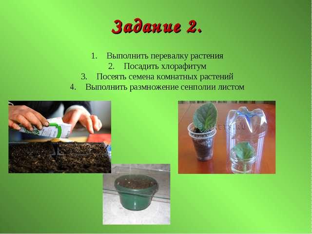 Задание 2. Выполнить перевалку растения Посадить хлорафитум Посеять семена ко...