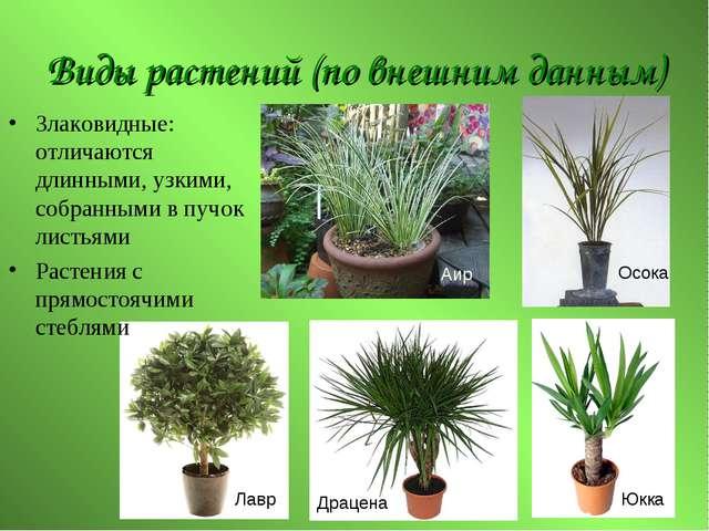 Виды растений (по внешним данным) Злаковидные: отличаются длинными, узкими, с...
