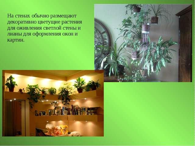 На стенах обычно размещают декоративно цветущие растения для оживления светло...