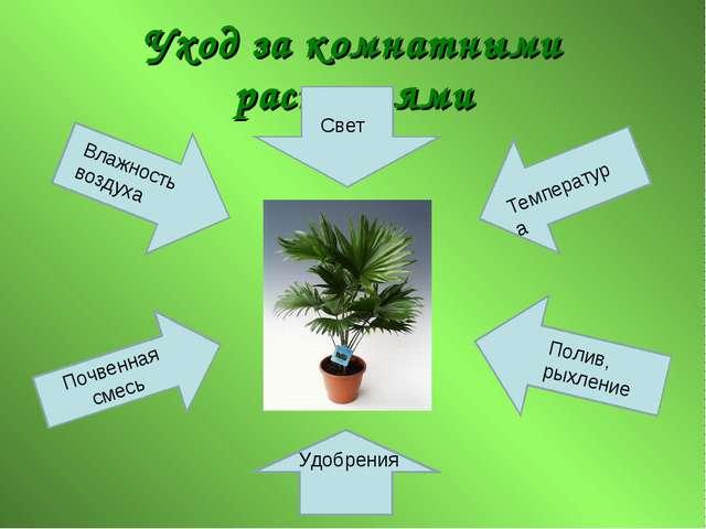 Уход за комнатными растениями Свет Удобрения