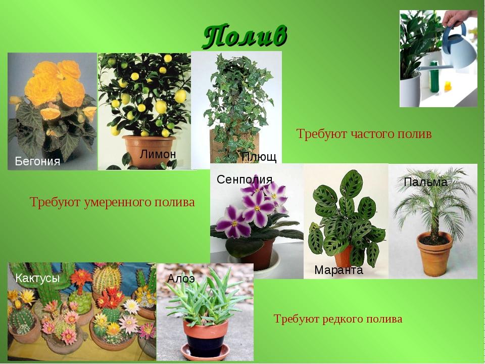 картинки комнатных растений в презентации особенности