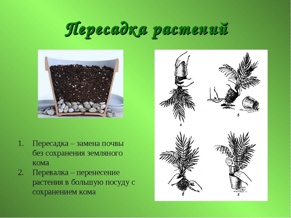 Пересадка растений Пересадка – замена почвы без сохранения земляного кома Пер...