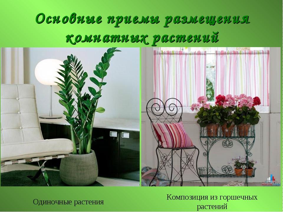 Основные приемы размещения комнатных растений Одиночные растения Композиция и...