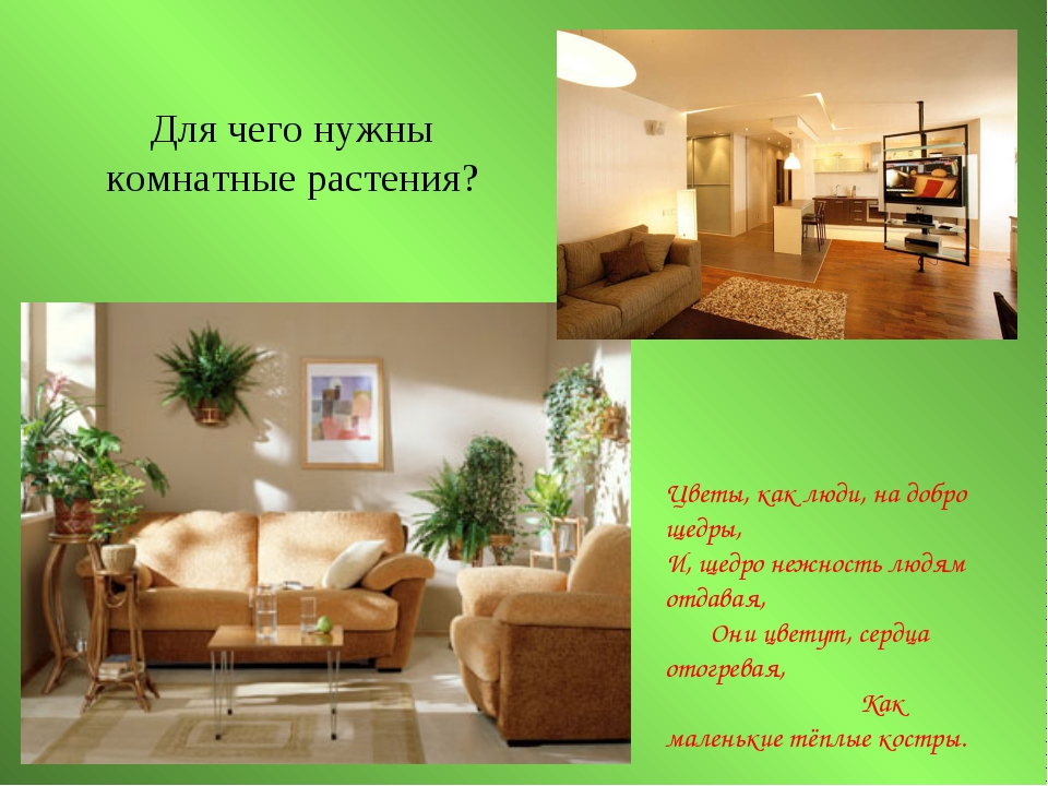 Для чего нужны комнатные растения? Цветы, как люди, на добро щедры, И, щедро...