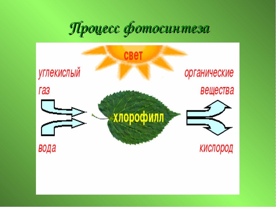 оригинал журнала, процесс фотосинтеза у растений площадка