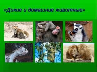 «Дикие и домашние животные»