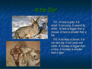 At the Zoo! P.5: A hare is grey. It is small. It can jump. It cannot fly, cli