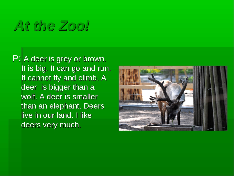 At the Zoo! P: A deer is grey or brown. It is big. It can go and run. It cann...