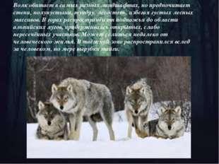 Волк обитает в самых разных ландшафтах, но предпочитает степи, полупустыни,т