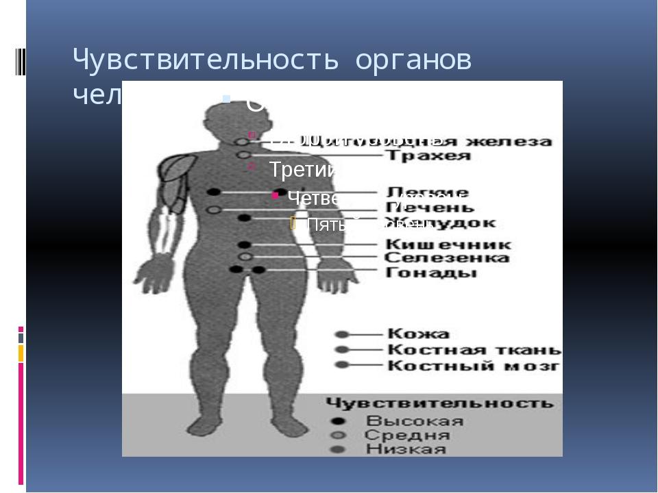 Чувствительность органов человека