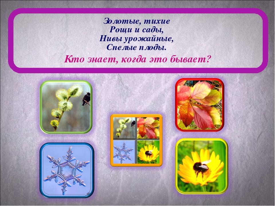 Золотые, тихие Рощи и сады, Нивы урожайные, Спелые плоды. Кто знает, когда эт...