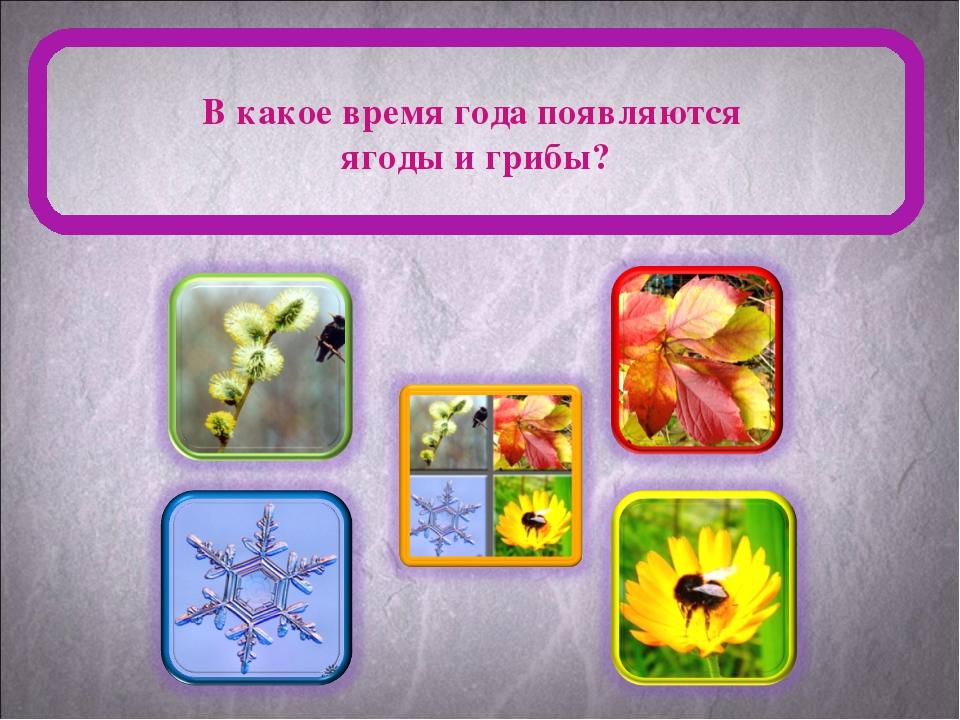 В какое время года появляются ягоды и грибы?