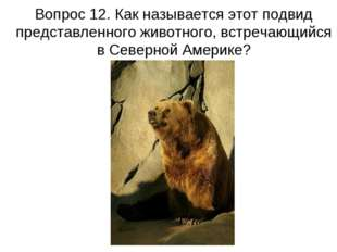 Вопрос 12. Как называется этот подвид представленного животного, встречающийс