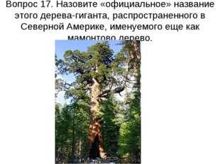 Вопрос 17. Назовите «официальное» название этого дерева-гиганта, распростране