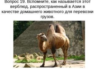 Вопрос 19. Вспомните, как называется этот верблюд, распространенный в Азии в