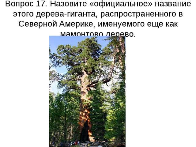 Вопрос 17. Назовите «официальное» название этого дерева-гиганта, распростране...