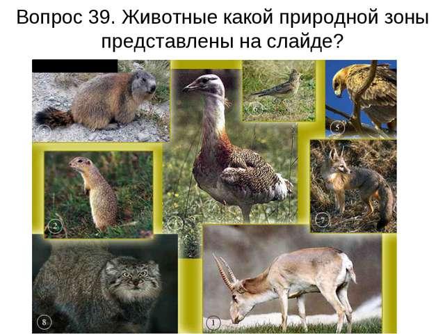 Вопрос 39. Животные какой природной зоны представлены на слайде?