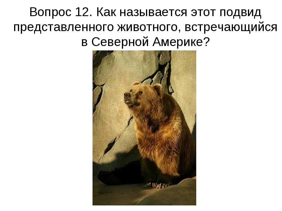 Вопрос 12. Как называется этот подвид представленного животного, встречающийс...