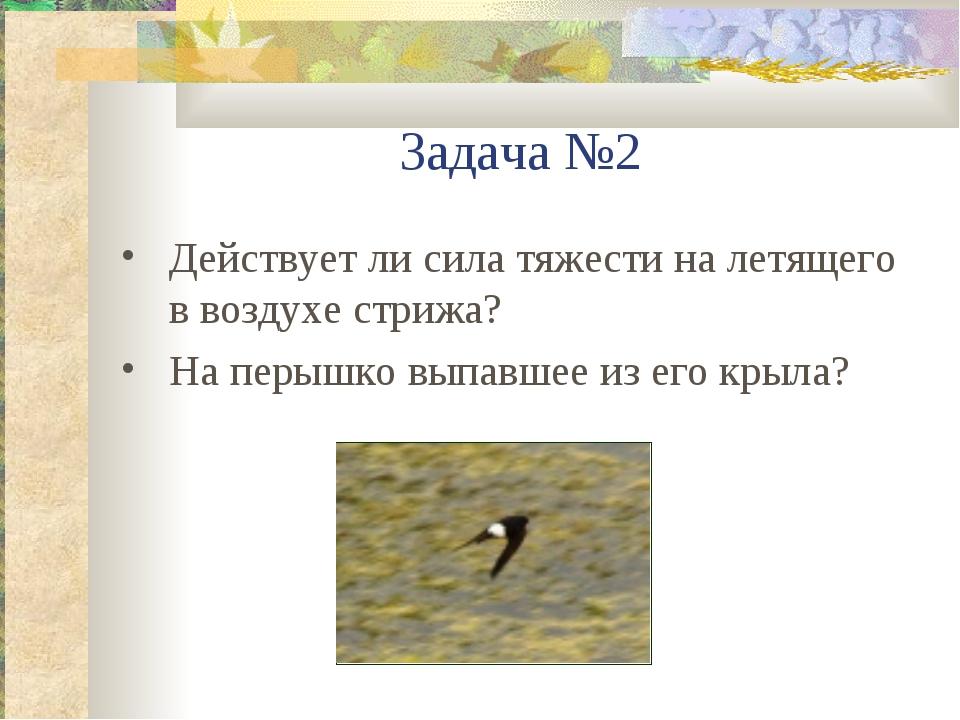 Задача №2 Действует ли сила тяжести на летящего в воздухе стрижа? На перышко...