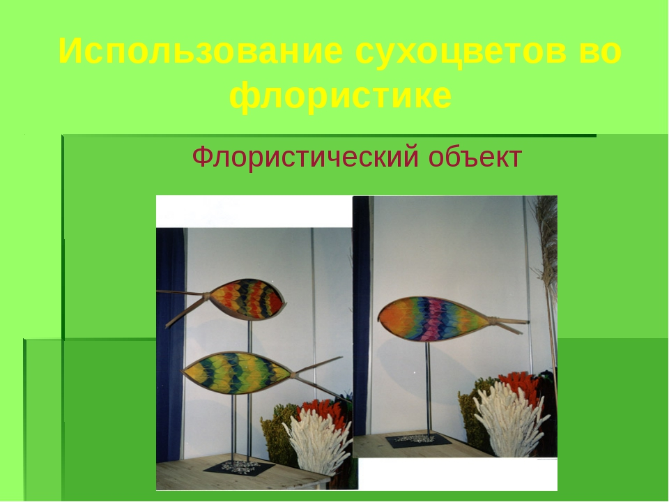 Использование сухоцветов во флористике Флористический объект