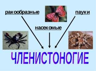 ракообразные насекомые пауки
