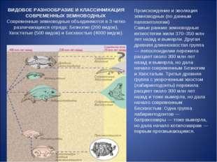 Происхождение и эволюция земноводных (поданным палеонтологии) Самые ранние з