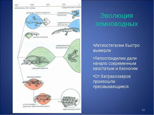* Эволюция земноводных Ихтиостегалии быстро вымерли Лепоспондилии дали начало...