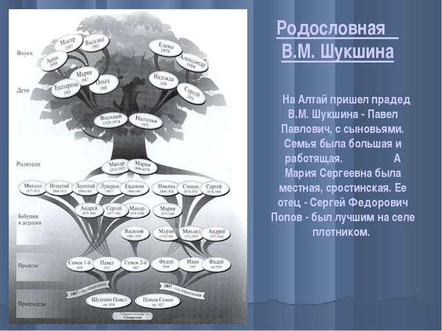 Родословная В.М. Шукшина На Алтай пришел прадед В.М. Шукшина - Павел Павлович...