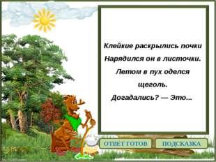 http://linda6035.ucoz.ru/ Клейкие раскрылись почки Нарядился он в листочки. Л