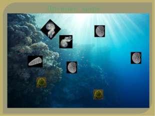 Древнее море