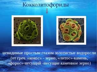 невидимые простым глазом золотистые водоросли (от греч. «кокос» - зерно, «ли
