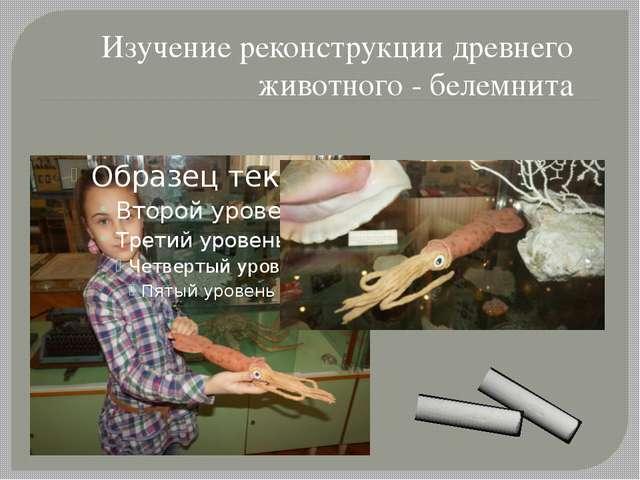 Изучение реконструкции древнего животного - белемнита