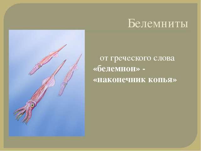 Белемниты от греческого слова «белемнон» - «наконечник копья»