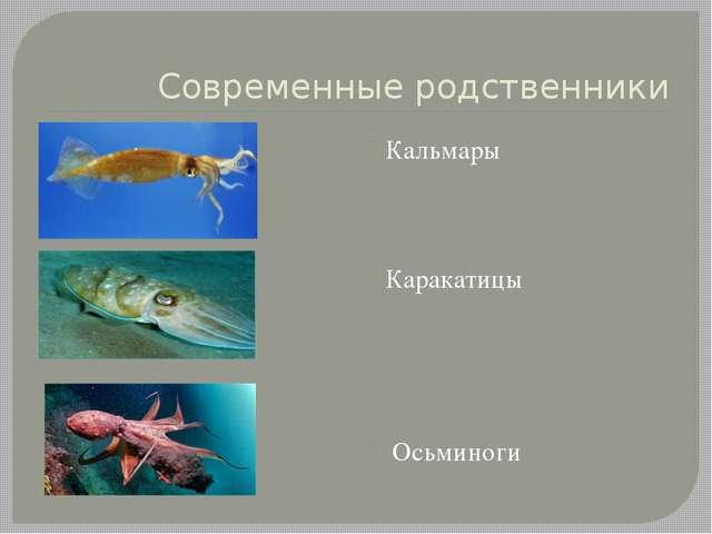 Современные родственники Кальмары Каракатицы Осьминоги